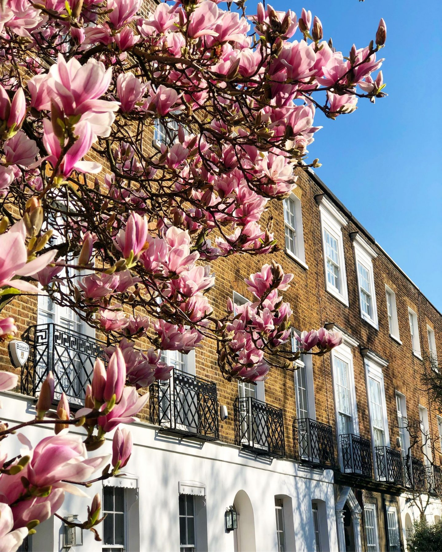 blossom-in-chelsea-london